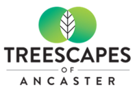 Treescapes of Ancaster new development in Nakoma
